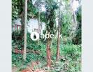 100 Perches Land for Sale in Matale Hulangamuwa
