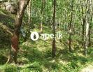 7.5 acres rubber land in Makandura